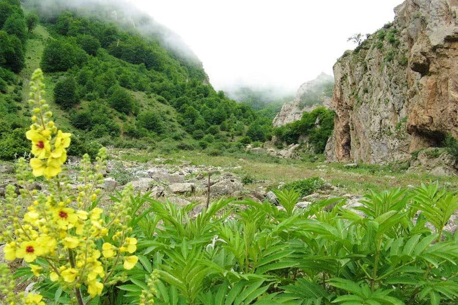 Daryasar Plain